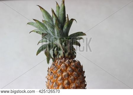 Pineapple Is A Tropical Plant With An Edible Fruit And The Most Economically Significant Plant In Th