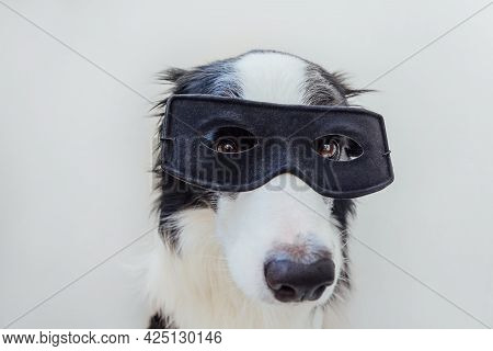 Funny Portrait Of Cute Dog Border Collie In Superhero Costume Isolated On White Background. Puppy We