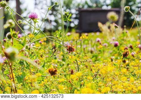 Summer Lush Grassland, Colorful Flowers, Grass Close-up, Bright Natural Background