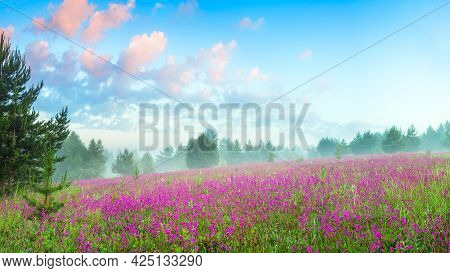 Beautiful Spring Landscape With Flowering Pink Flowers On Meadow And Forest At Sunrise. Amazing Scen