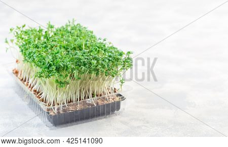 Microgreens In A Plastic Container, Homegrown Cress Salad, Horizontal, Copy Space