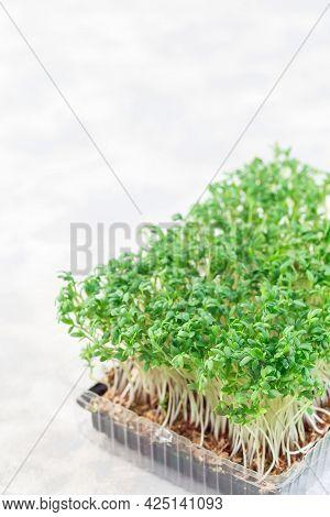 Homegrown Cress Salad, Microgreens In A Plastic Container, Homegrown Cress Salad, Vertical, Copy Spa