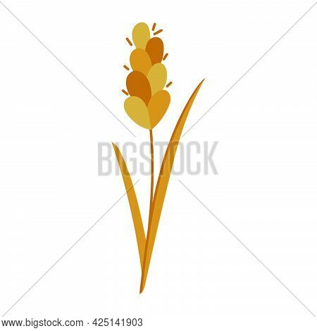 Vector Wheat Spike, Cereals Hand Drawn Flat Icon