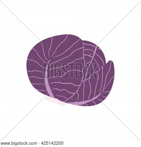 Red Cabbage. Flat Hand Drawn Textured Illustration Of Purple Cabbage.