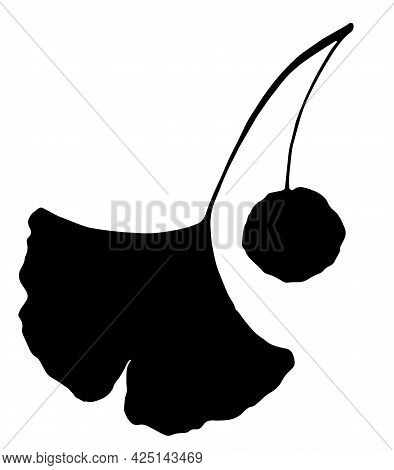 Vector Silhouette Of A Forked Ginkgo Tree Leaf With A Round Berry In The Middle. Healing Ginko In An