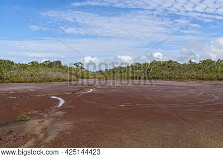 The Muddy Bed Of Salt Flats Amongst A Mangrove Environment With Natural Water Evaporation