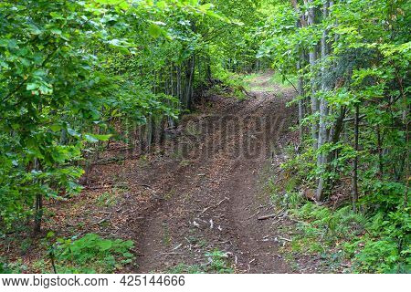 Off road track in the Carpathians, Romania, Europe