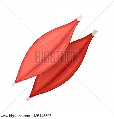 Human Muscle Tissue Flat Icon. Vector Muscle Anatomy Isolated Icon