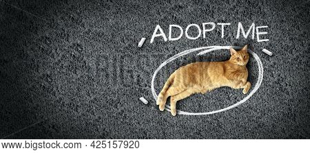 Pet Adoption And Adopting Pets Or Cat Adoptions Or Rescue Animal Shelter Awareness As A Feline Layin