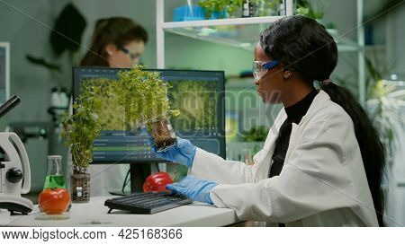African Woman Researcher Analyzing Gmo Of Tomato And Sapling Working In Biological Laboratory. Bioch