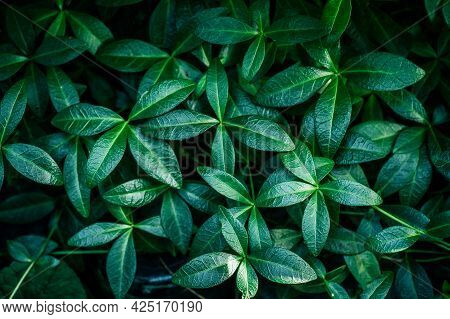 Green Plant Foliage Nature Background, Top View. Fresh Garden Abstract Foliage.