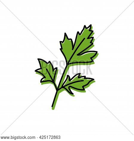 Parsley Herbs. Vegetable Sketch. Color Simple Icon. Hand Drawn Vector Doodle Illustration