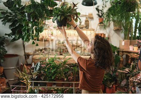 Young Saleswoman Caring About The Potted Plants While Working In Flower Shop