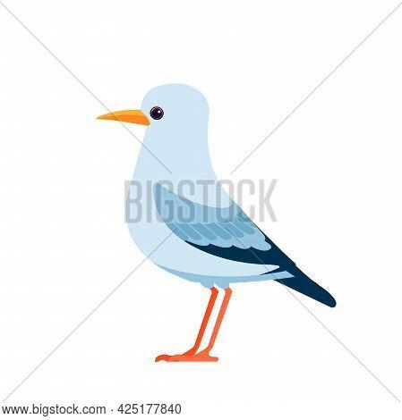Gull Or Seagulls Are Seabirds Of The Family Laridae. Seabirds Cartoon Flat Vector Illustration Isola