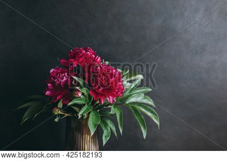 Beautiful Dark Crimson Peony On A Dark Background. Place For Text.