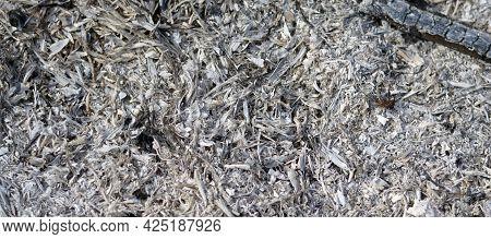 Ash Texture. Wood Ash Texture. Burnt Wood