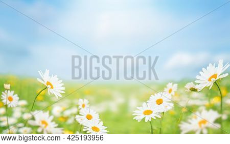 Blue Sky And Field With Green Grass And Daisy Flowers. Background For Summer, Nature, Ecology And En