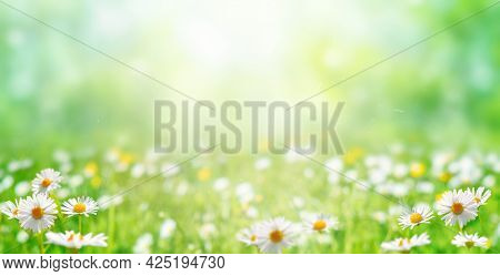 Meadow With Green Grass And Daisy Flowers. Background For Summer, Nature, Ecology And Environmental