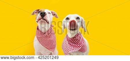 Banner Two Hungry Dogs Straight Licks Wearing A Checkered Napkin, Isolated On Yellow Background. Eat