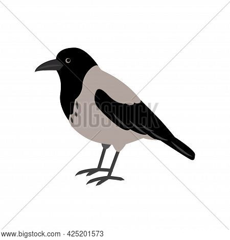 Hoodie Isolated On A White Background. Crow Standing. City Birds.