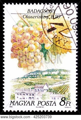 Hungary - Circa 1990: A Postage Stamp From Hungary Showing Sort Of Grape Olaszrizling In Badacsony R