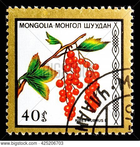 Mongolia - Circa 1986: A Postage Stamp From Mongolia Showing Berries Ribes Rubrum