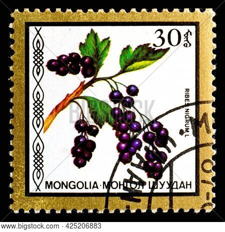 Mongolia - Circa 1986: A Postage Stamp From Mongolia Showing Berries Ribes Nigrum