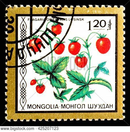 Mongolia - Circa 1986: A Postage Stamp From Mongolia Showing Berries Fragaria Orientalis