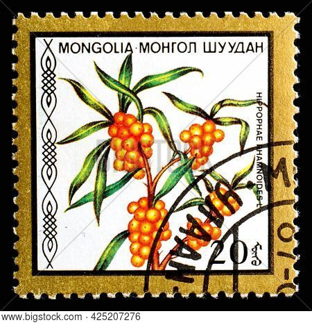 Mongolia - Circa 1986: A Postage Stamp From Mongolia Showing Berries Hippophae Rhamnoides Seaberry