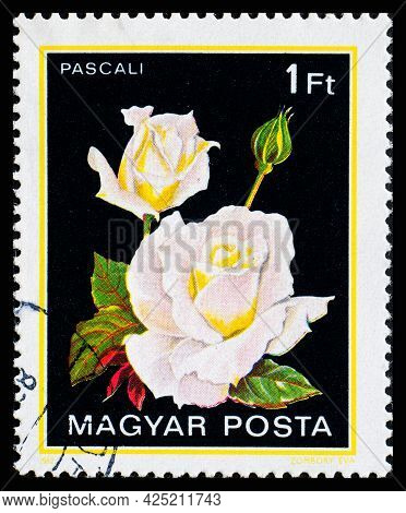 Hungary - Circa 1982: A Postage Stamp From Hungary Showing Flowers Pascali
