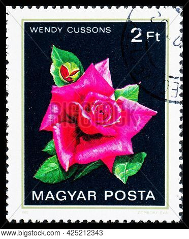 Hungary - Circa 1982: A Postage Stamp From Hungary Showing Flowers Wendy Cussons Rose