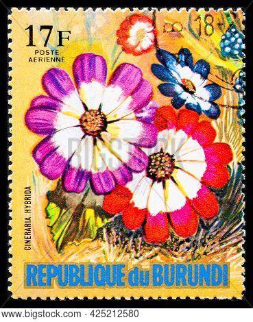 Burundi - Circa 1973: A Postage Stamp From Burundi Showing Garden Flowers Cineraria Hybrida
