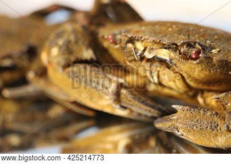 Delicious Seafood Pubescent Crab Tongs Crustacean Tweezers