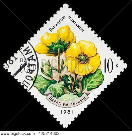 Russia, Ussr - Circa 1981: A Postage Stamp From Ussr Showing Flowers Parageum Montanum