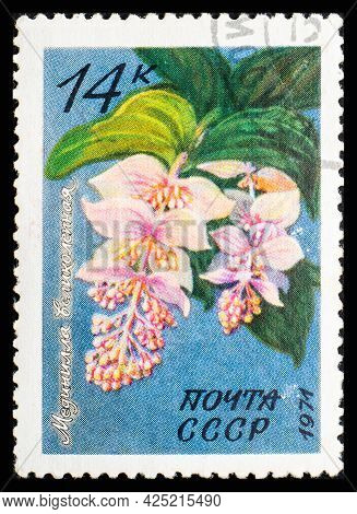 Russia, Ussr - Circa 1971: A Postage Stamp From Ussr Showing Flowers Medinilla Magnifica