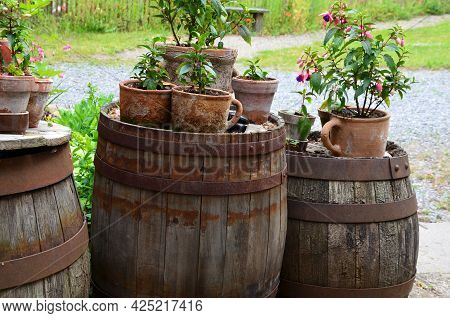 Terracotta Flower Pots With An Ear. Are Laid On Old Wooden Beer Kegs With A Metal Hoop. Purple-flowe