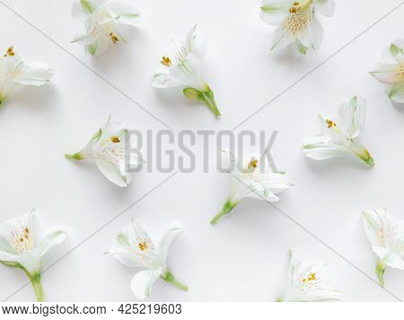 Fresh White Flowers On A White Background.