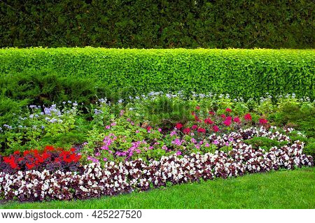 Garden Bed In Backyard With Deciduous Plants With Evergreen Hedge And Flower Bed With Flowers Near A