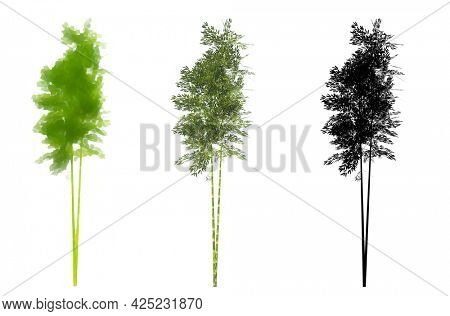 Set or collection of Bamboo trees, painted, natural and as a black silhouette on white background. Concept or conceptual 3d illustration for nature, ecology and conservation, strength, endurance