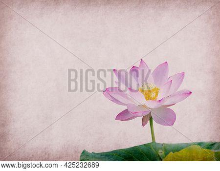 lotus on pink old antique vintage paper background