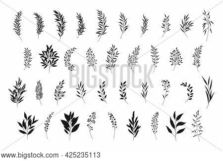 Leaves Set, Hand Drawn Branches Silhouettes. Meadow Herbs, Wild Plants, Twigs, Botanical Elements Fo