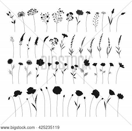 Wildflowers Set, Hand Drawn Flowers Silhouettes. Meadow Herbs, Wild Plants, Botanical Elements For D