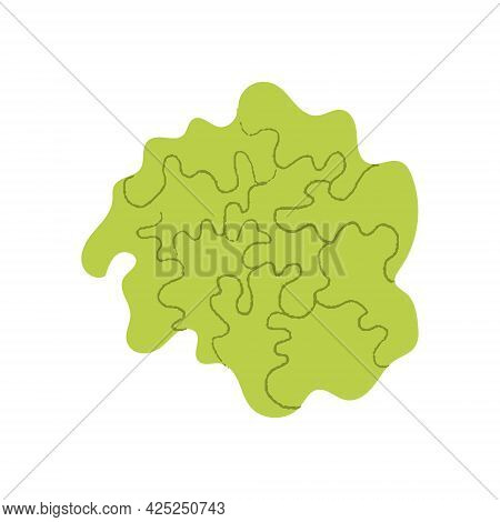 Lettuce. Flat Hand Drawn Textured Illustration Of Leafy Salad Head.