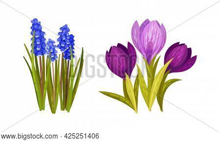 Spring Flowers On Green Stem As Seasonal Botany Growing Vector Set