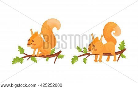 Fluffy Squirrel Character Sitting And Sleeping On Tree Branch Vector Set