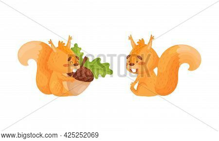 Fluffy Squirrel Character Sitting With Acorn Vector Set