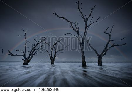 Ocean Water Rushing In Past A Cluster Of Dead Trees On A South Carolina Beach