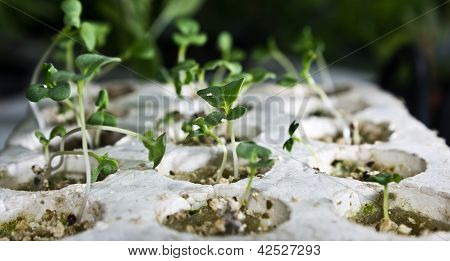 Plants grown using hydroponics.