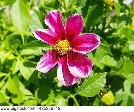 Beautiful Pink Flower In The Garden, Botanical Photography.