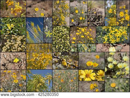 28 Species Of Yellow Blooming Southern California Indigenous Plants Growing Wild In Their Native Phy